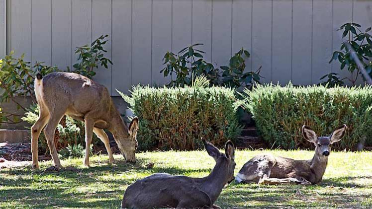Designing your Yard to Eliminate Destructive Wildlife