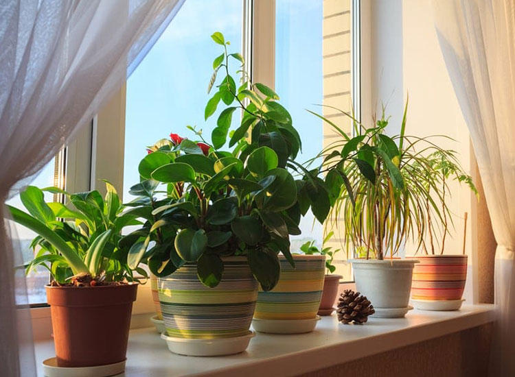 Going on Holiday? Here's How to Make Sure Your Pot Plants Survive