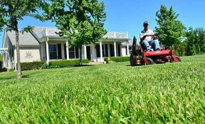 What to Do in Spring for Lawn Care?
